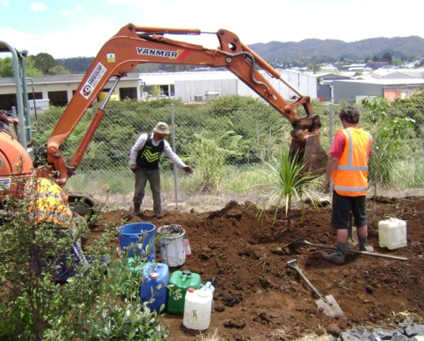 forest floor planting a tree in whangarei
