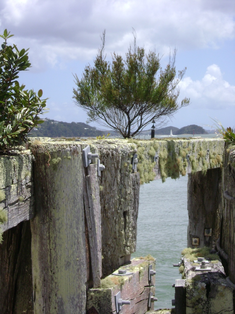 manuka plant (Leptospermum scoparium) growing on jetty